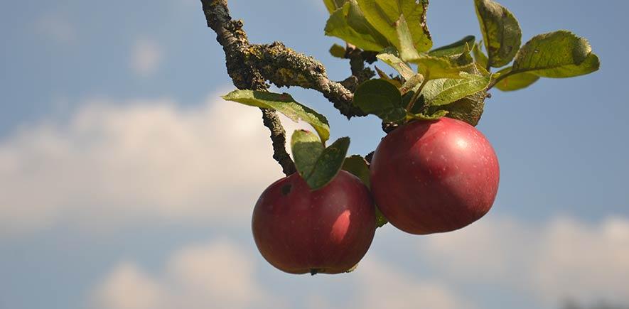 Apfel-Direktsaft